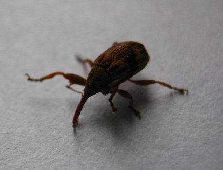 Как передвигаются клещи — умеют ли они прыгать или летать, как паразиты заползают на человека