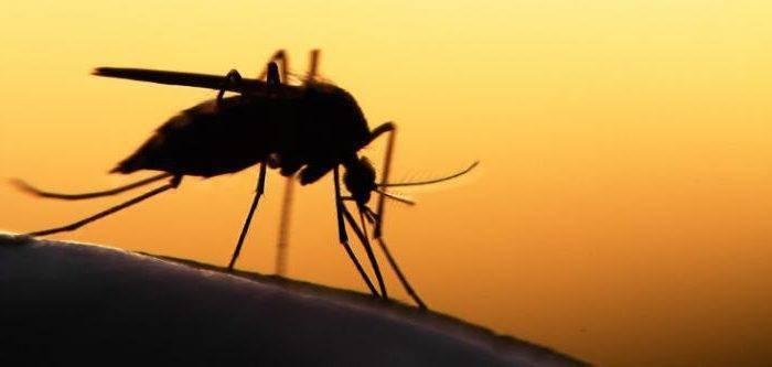 Как использовать ванилин от комаров?