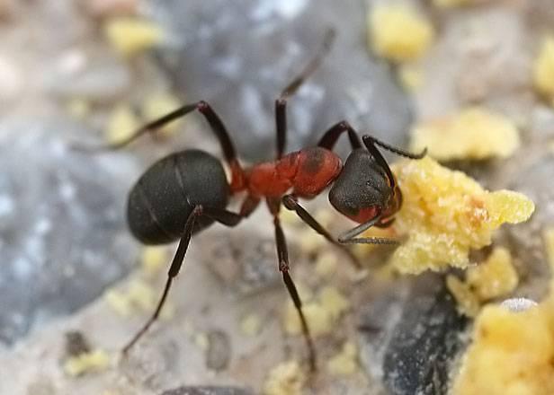 Самые эффективные методы борьбы с муравьями на садовом участке