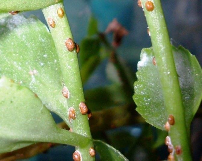 Вредители комнатных растений: фото и меры борьбы с ними
