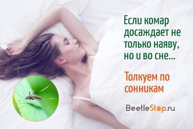 К чему снится комар. что означает образ комара во сне – толкования по сонникам и согласно народным поверьям