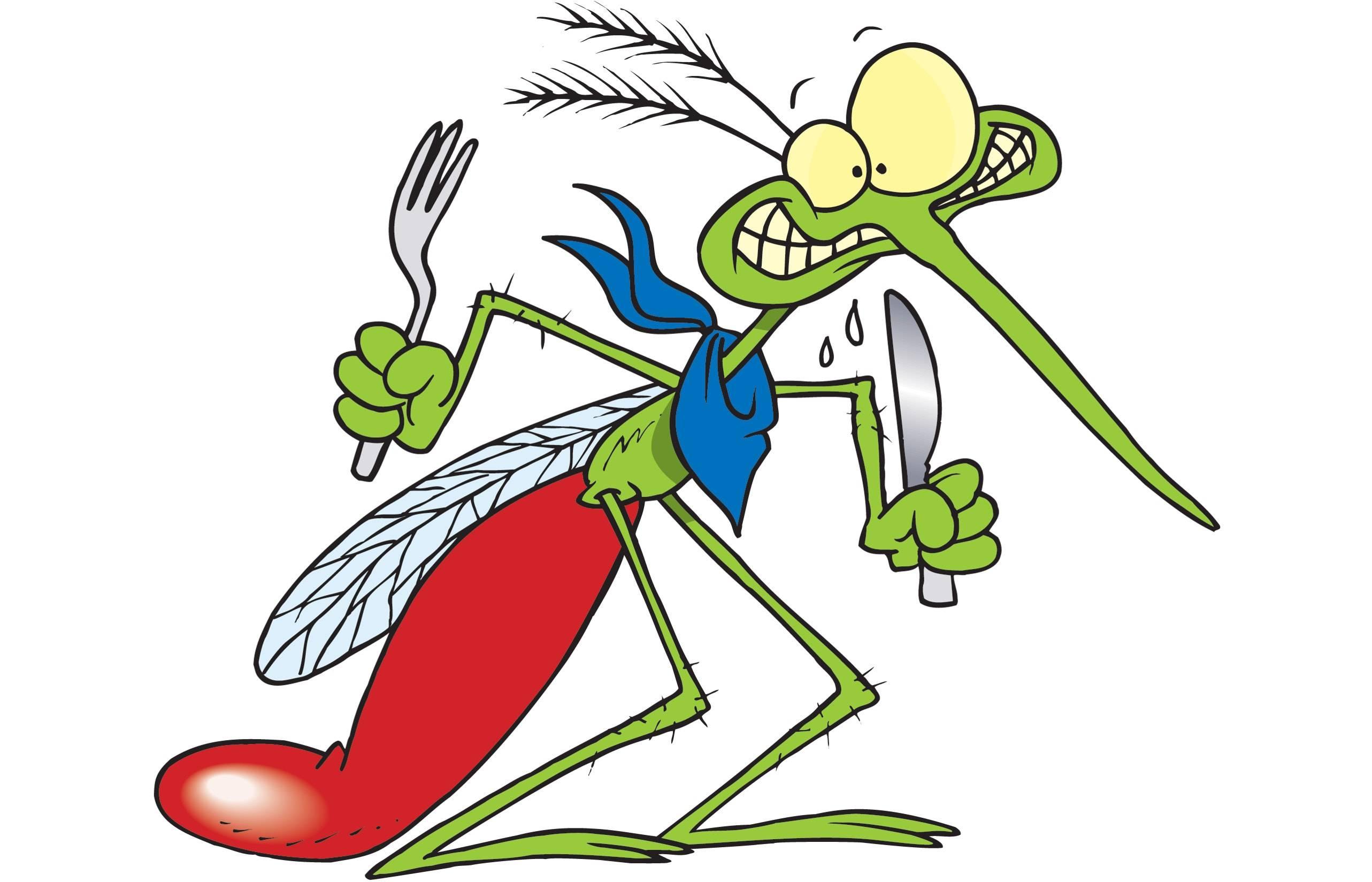 Как и для чего комары пьют кровь