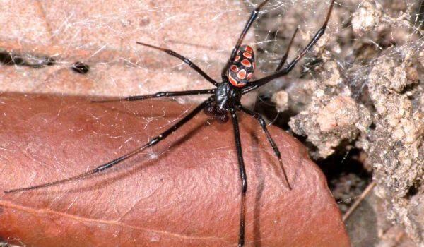 10 самых опасных пауков в мире