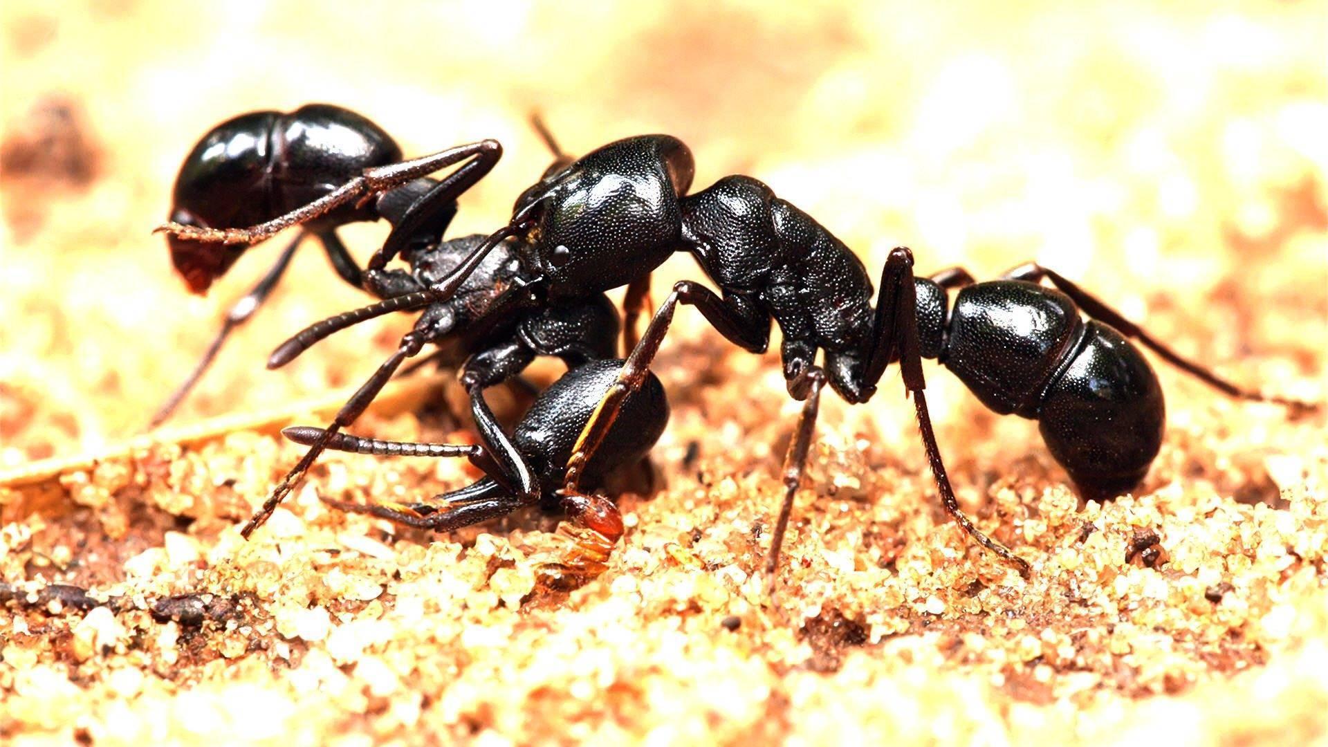 Приснились муравьи во сне: к чему снятся и как трактовать?