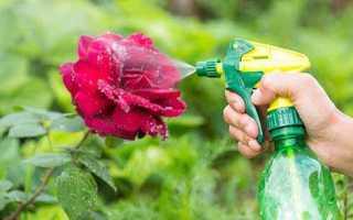 Биопрепараты и народные средства от тли на огурцах