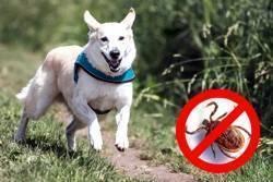 Как правильно выбрать ошейник от блох для собаки? топ 5 лучших вариантов