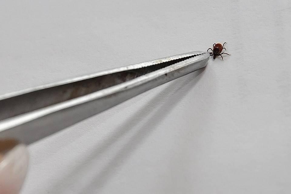 Как избежать укусов клещей: лучшие способы защиты