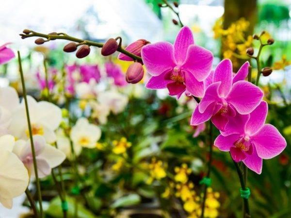 Паутинный и плоский клещ на орхидее: неожиданно простой способ профилактики