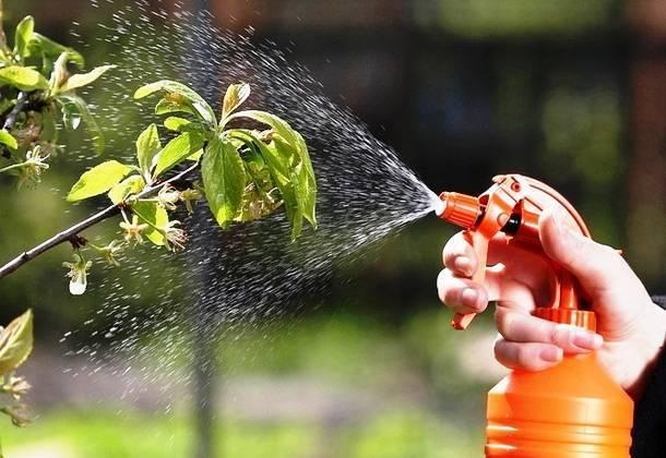 Как избавиться от садовых и огородных вредителей быстро и надолго?
