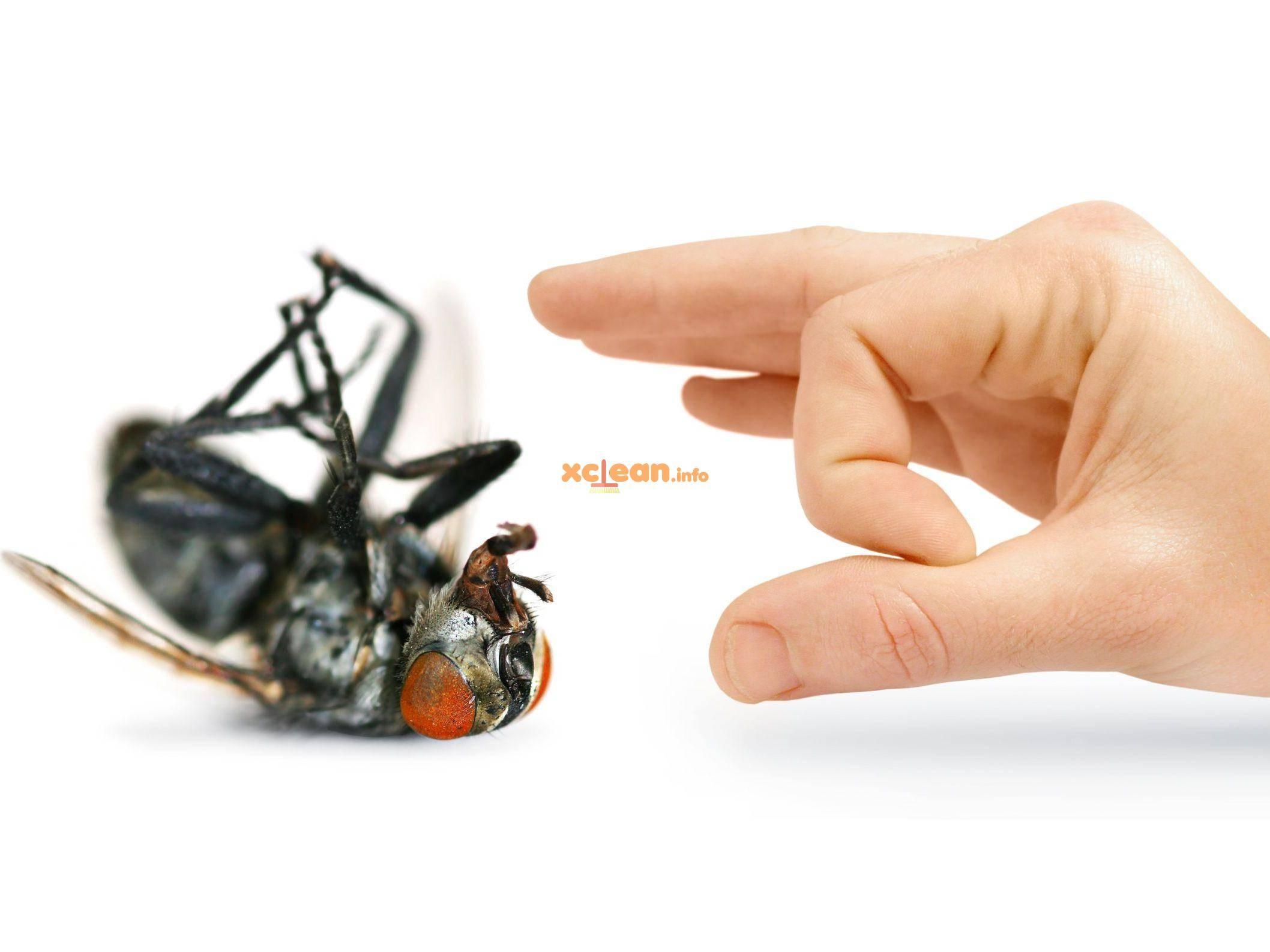 Как быстро и надолго избавиться от мух