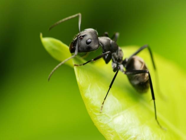 Как проходит борьба с муравьями на садовом участке: 4 совета