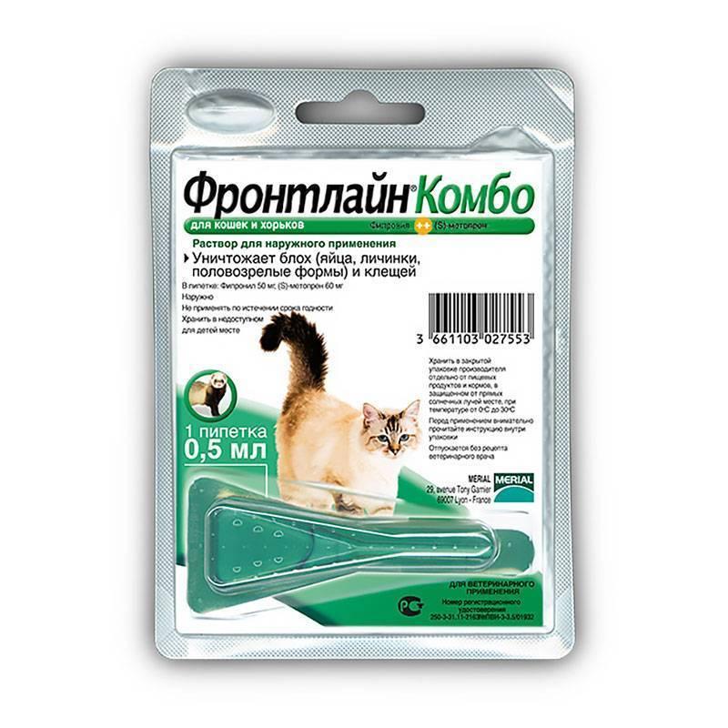 Что говорят ветеринары об использовании капель от клещей для кошек