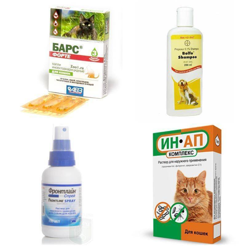 Власоеды у кошек: фото, симптомы и методы лечения