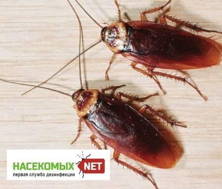 40 способов избавиться от тараканов в квартире и частном доме раз и навсегда