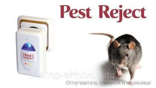 14 лучших отпугивателей крыс и мышей