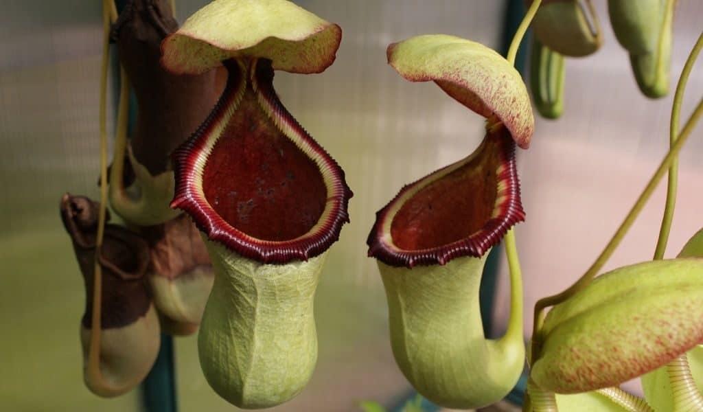 Растения хищники — фото и названия