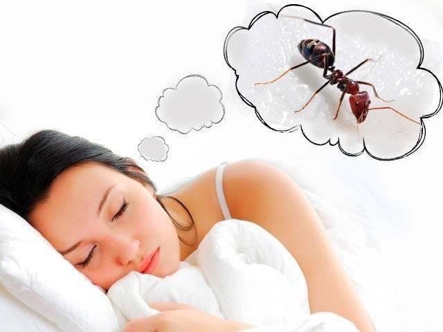 К чему снятся муравьи