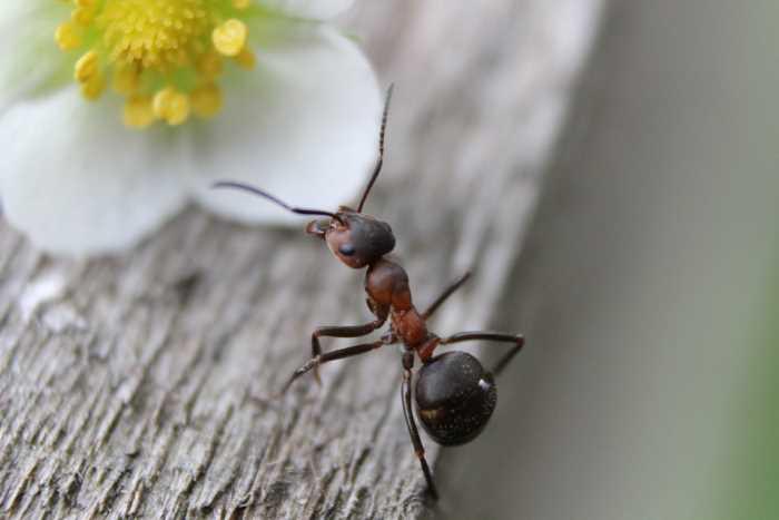 Как избавиться от муравьев на даче: обзор эффективных средств борьбы
