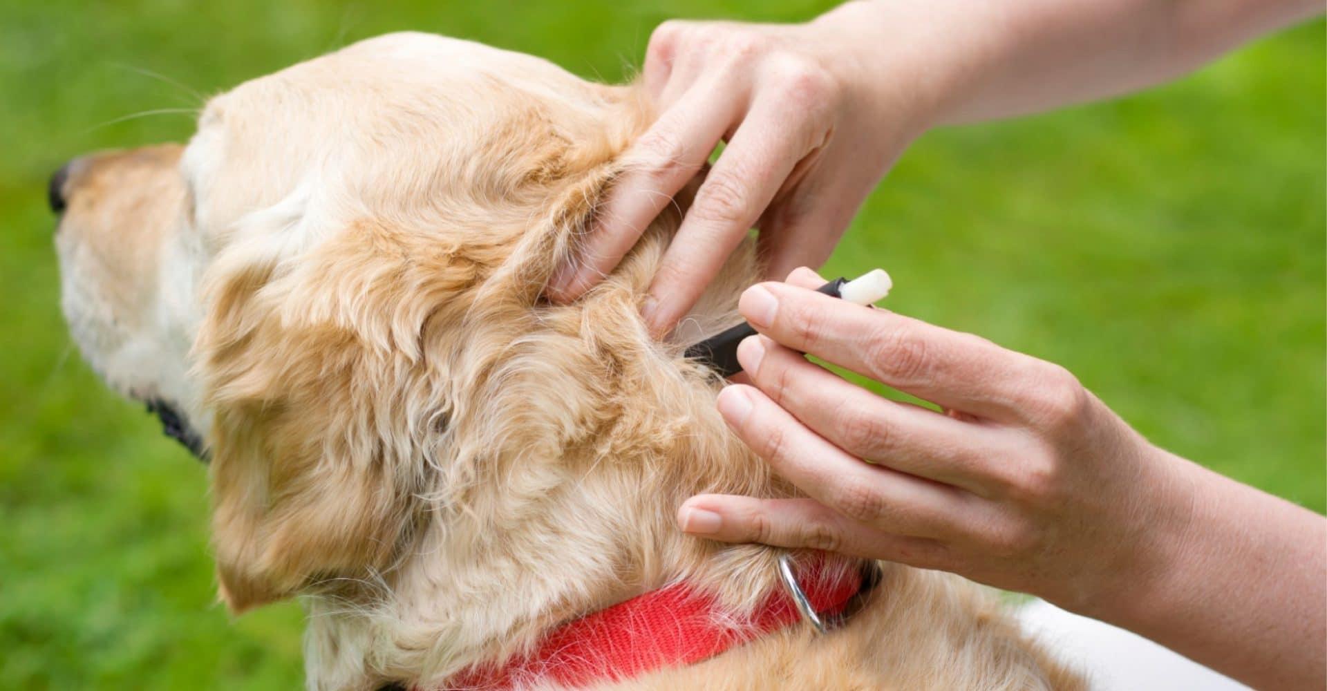 Что делать, если собаку покусали комары и мошки. собаки и насекомые – способы защиты питомцев чем можно мазать собаку от мошки