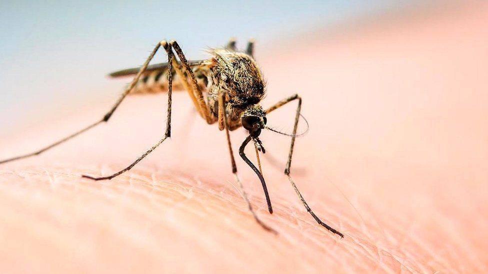 Узнай все признаки, как отличить укус комара и других кровососов от клопа