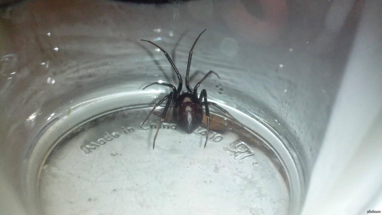 Почему уличные большие пауки вылазят ночью. как вывести пауков из частного дома? почему нельзя убивать пауков в доме