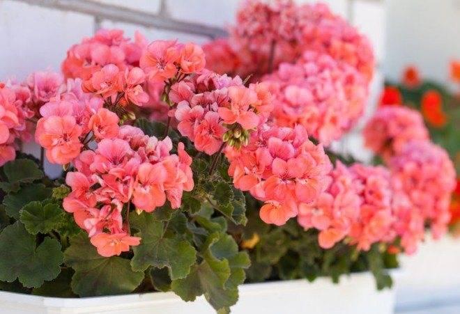 Методы борьбы с молью в саду и дома