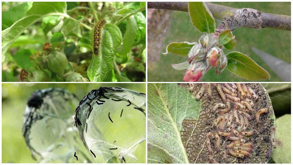 Пять самых нежеланных гостей нашего сада