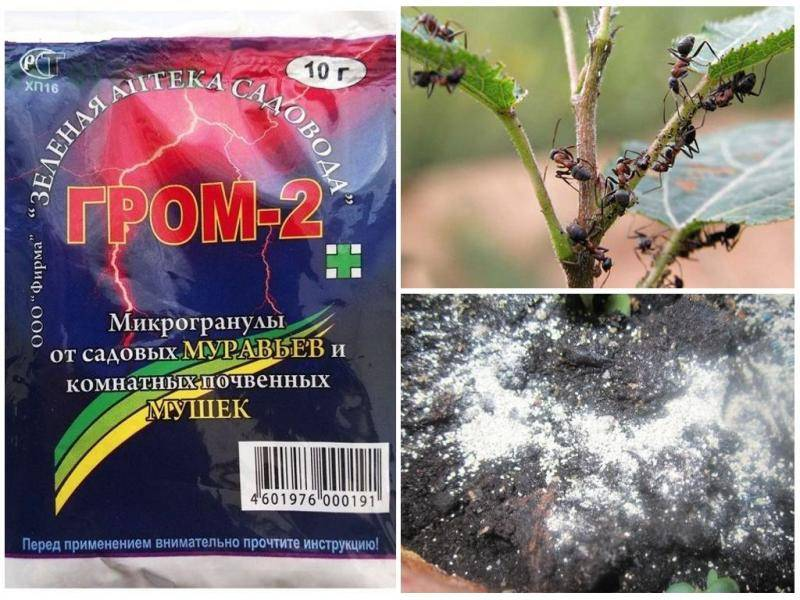 Средство гром 2 от муравьев