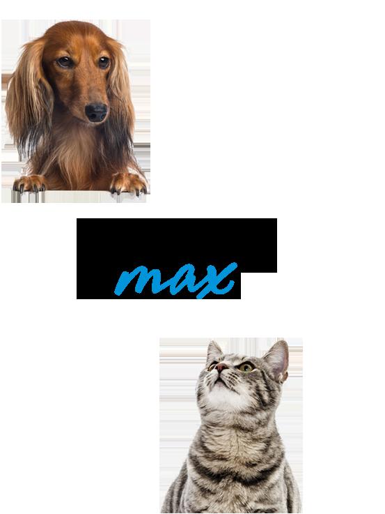 Капли (спрей) блохнэт для кошек и собак: инструкция по применению, отзывы
