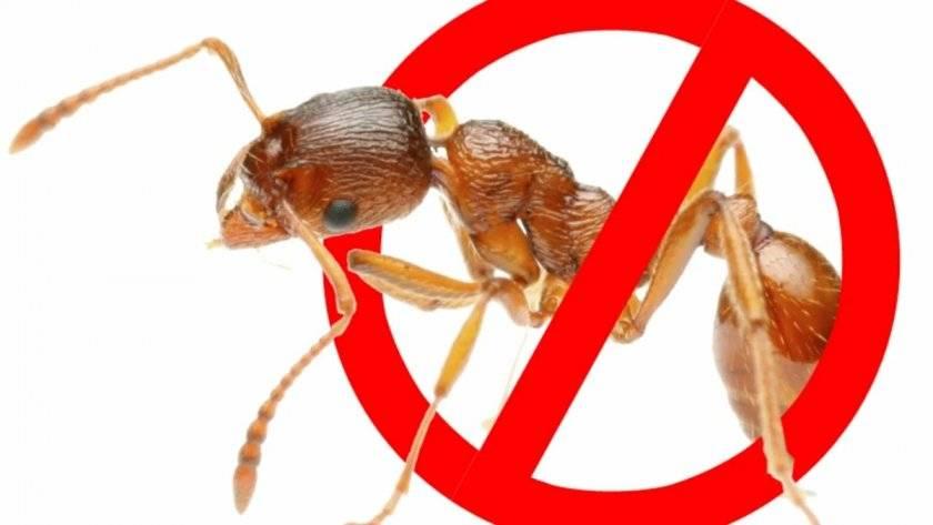 Как правильно применять уксус от муравьев в огороде