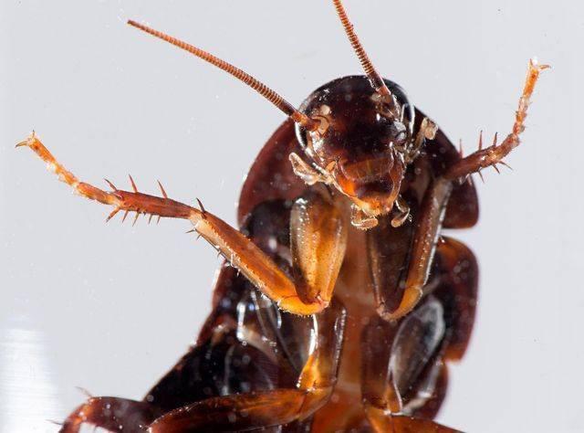 Уничтожение тараканов в квартире, фирмы москвы
