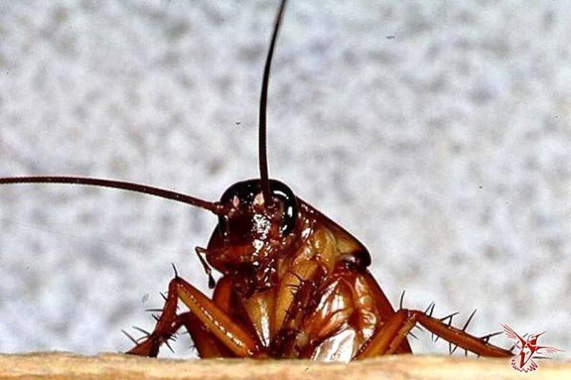 Что будет если исчезнут тараканы во всем мире