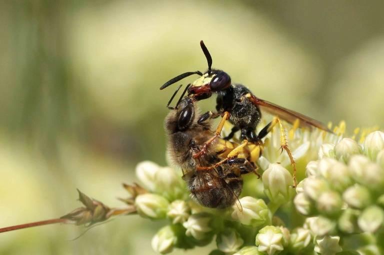 Как избавиться от муравьев на участке и в доме