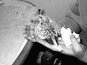 Куриный клещ (dermanyssus gallinae) и птичий клоп – это одно и тоже? как избавиться от паразита раз и навсегда