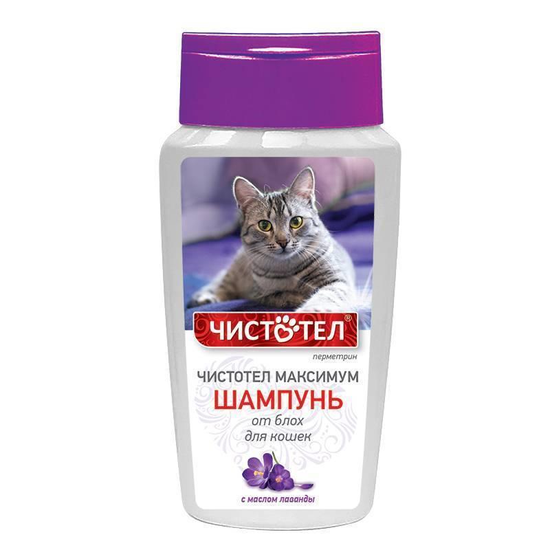Популярные средства для выведения блох у кошек