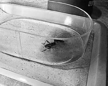 Испугаться насекомое