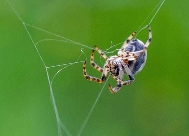 Почему у паука 8 ног. сколько ног у паука и почему всё не так однозначно