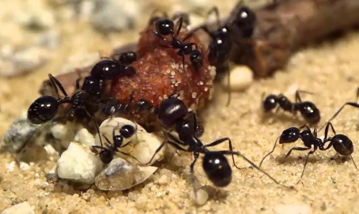 Что делают муравьи осенью
