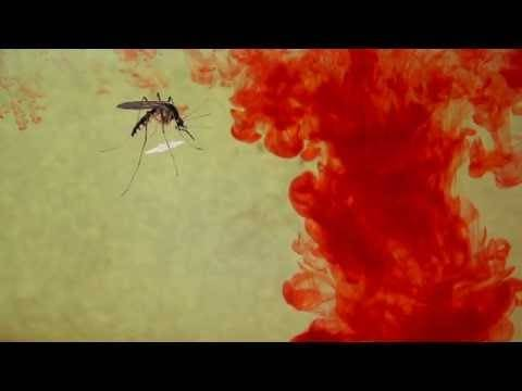 Может ли комариный укус привести к воспалению мозга и смерти?
