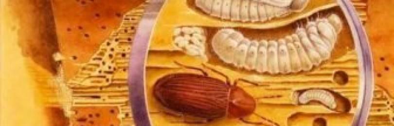 Древесные точильщики. древесный жук: виды точильщиков и методы борьбы с ними