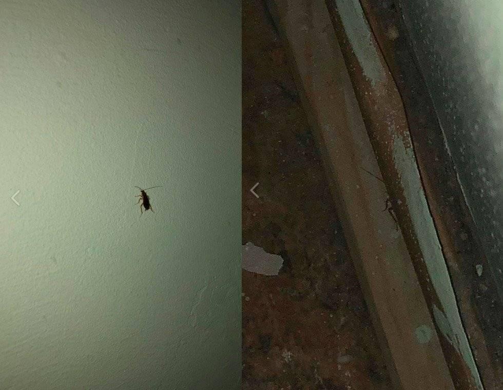 Боязнь тараканов, фобия