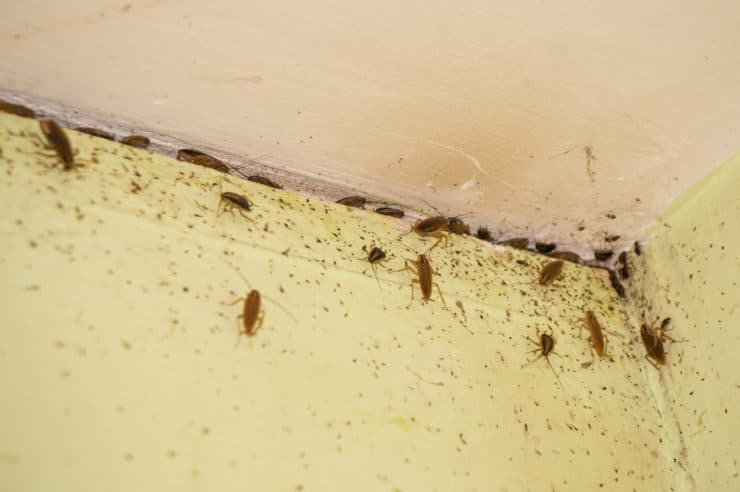 Выбираем самое безопасное для здоровья людей и домашних питомцев средство от тараканов. анализируем различные формы выпуска