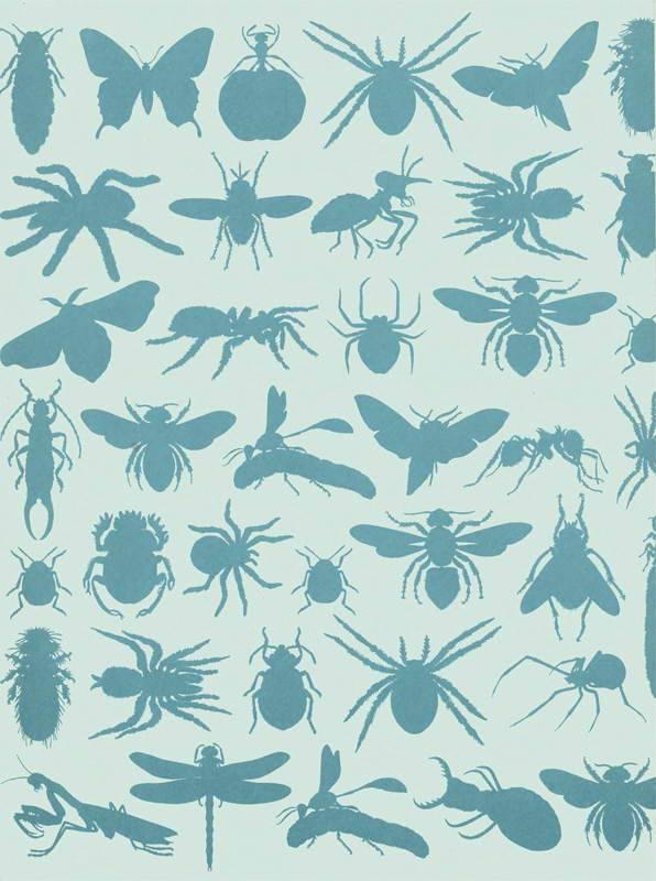 Тараканы для домашнего террариума
