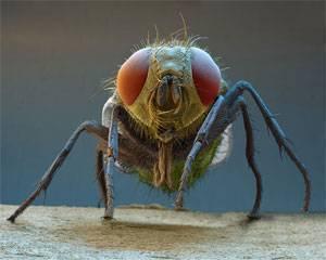 Как избавиться от мух в квартире: практическое пособие