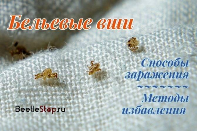 Как выглядят вши на голове в волосах – как выглядят насекомые и их яйца: симптомы и фото педикулёза, лечение в домашних условиях
