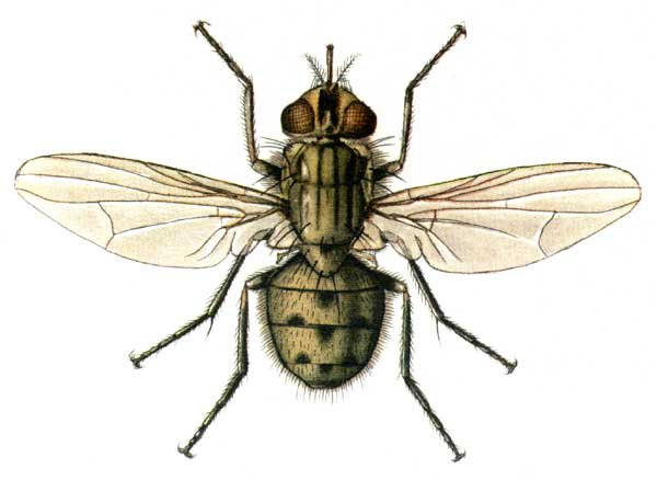 Стоит ли опасаться укусов мух жигалок