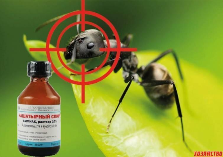 Нашатырный спирт от комаров. амиак от комаров нашатырь от мошек