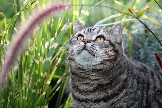 Лекарства для кошек от клещей