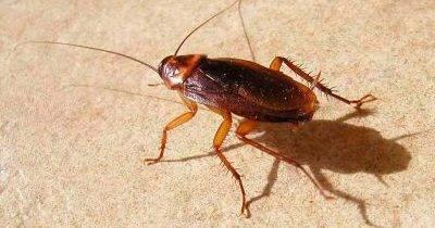 Почему тараканы стасики?