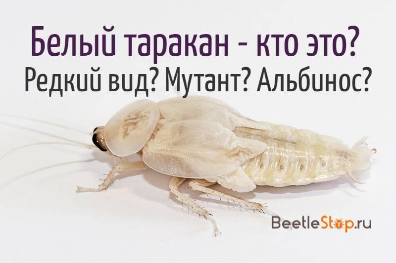 Таракан — интересные факты